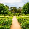 Parramatta Park, NSW, Australia