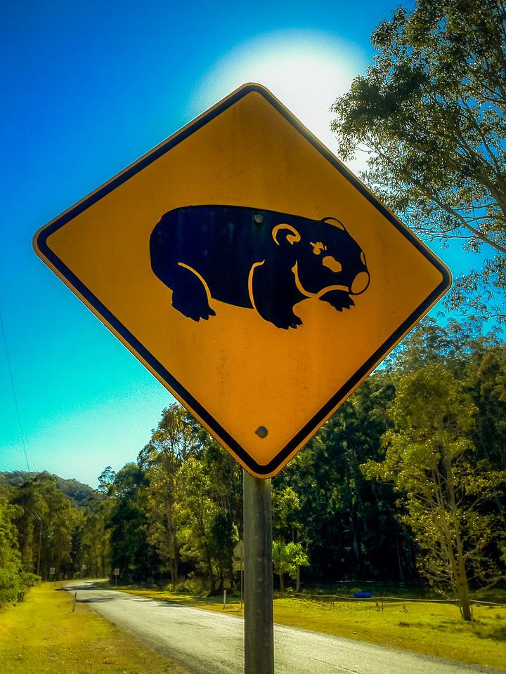 Wombats.