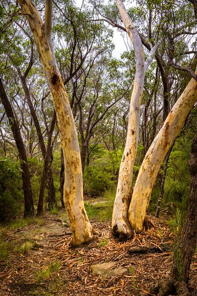 Woodford, Sydney, NSW, Australia