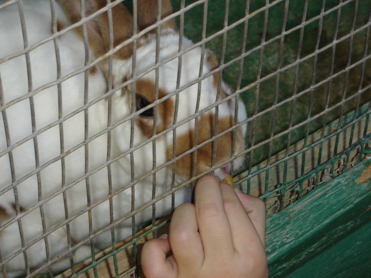 The petting zoo has a lot of rabbits. You can feed them and other small easily bred animals. Sometimes they sell them when the quantities get over-whelming.