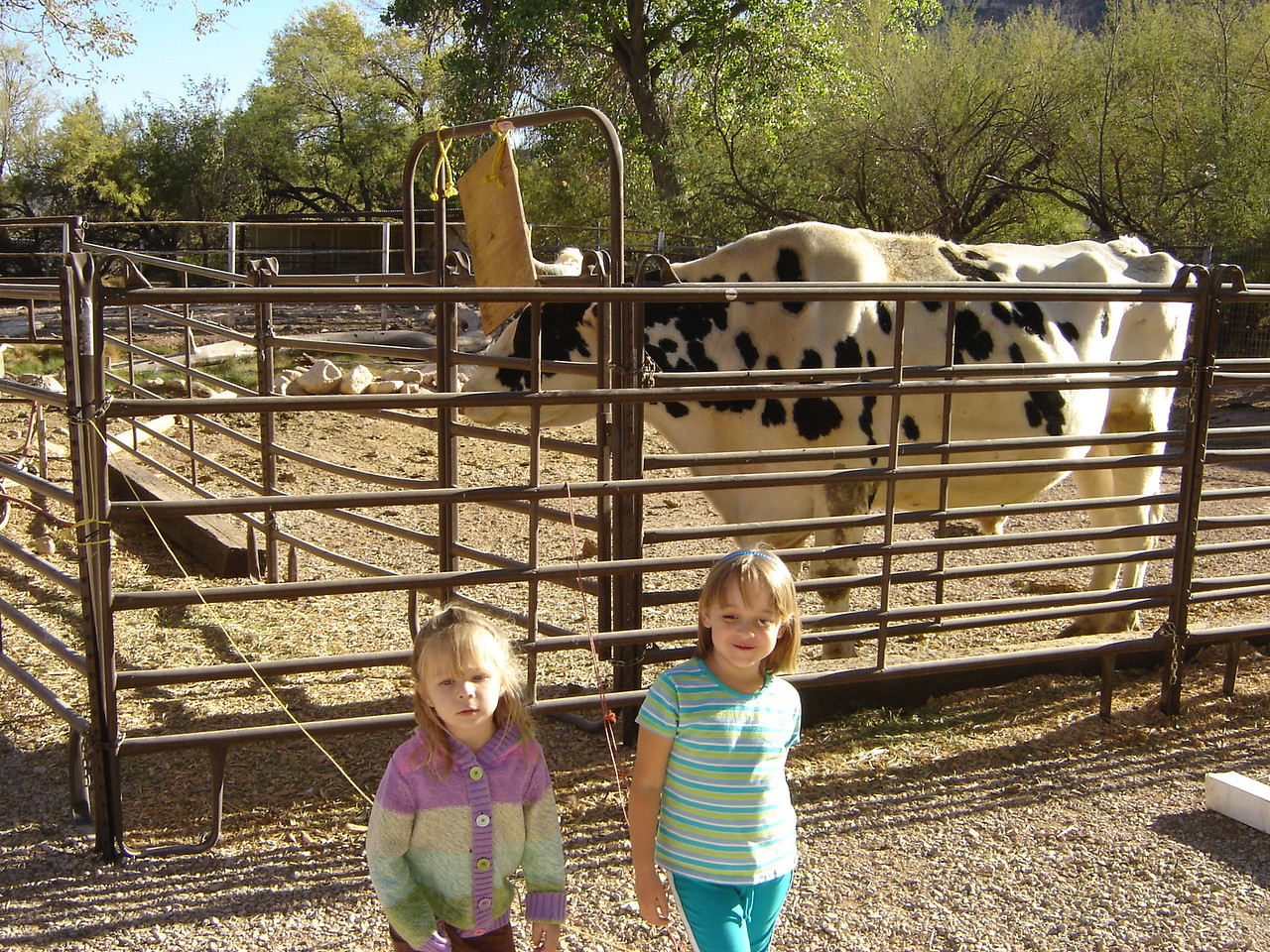 They have a Texas Longhorn. It's amazing how big this animal is.