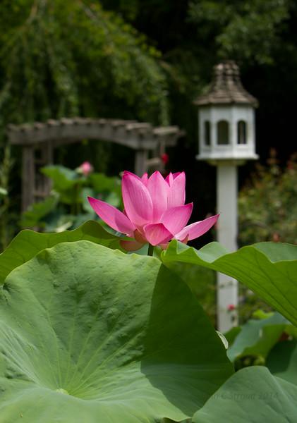 Serendipity Gardens in Mooresville, NC