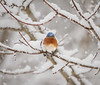 Back-at-ya Bluebird Burrrrrrrrrrrr