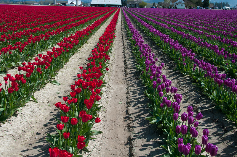 "Visit  <a href=""http://www.sockeyephotography.com"">http://www.sockeyephotography.com</a> for more photos."