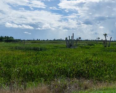 Viera Wetlands 2012