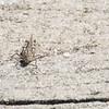 Funky little grasshopper I encountered on the trail.