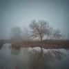 January Mists