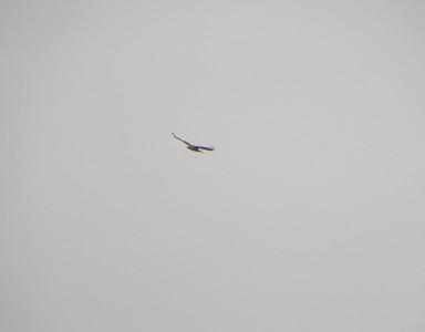 A bird, being a bird. photo by Christopher Brian Deem