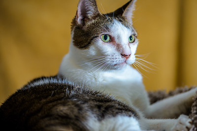 CatTwo_008