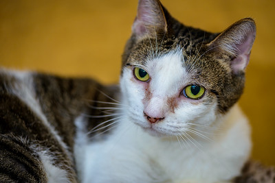 CatTwo_009