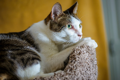 CatTwo_005