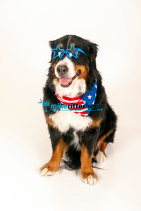 lucy the Bernese-008