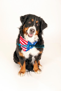 lucy the Bernese-012