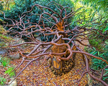 Ray Tolan and Tiffany Bernard's magnificent  metal tree in the Uncommon Garden which took years to create!