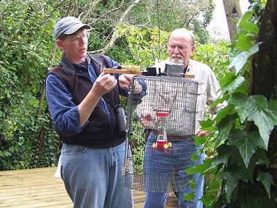preparing to trap a hummingbird for banding, September 27, 2009