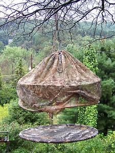 hummingbird trap for banding, September 27, 2009