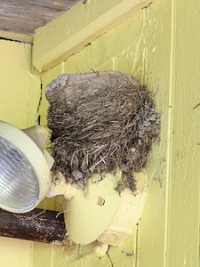 old Barn Swallow nest showing the inner layers at the Berks County Heritage Center, June 15, 2019
