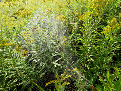 spider web, September 27, 2016