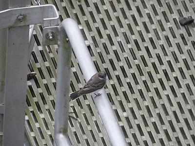a wet bird, September 10, 2018