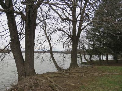 lakeside trees, April 17, 2018