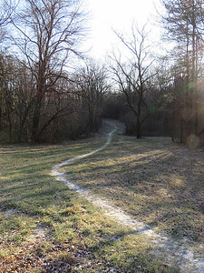 trail at Peter's Creek, January 15, 2017