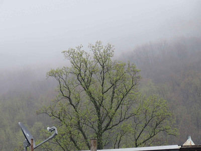 a tree leaving out on a foggy morning, April 25, 2018