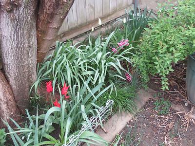 a portion of my back garden, April 27, 2018