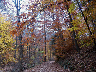 trail through colorful autumn trees, November 5, 2015
