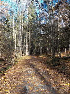 evergreen trees along a trail, November 5, 2015