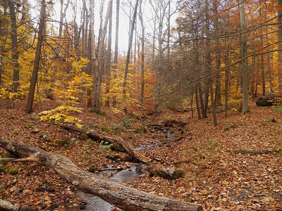small creek and colorful autumn trees, November 5, 2015