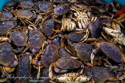 Dungeness Crab Festival