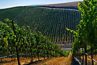 Livermore Winery -122_DxO_raw-Edit
