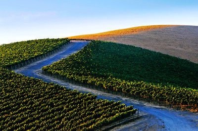 Livermore Winery -271_DxO_raw-Edit