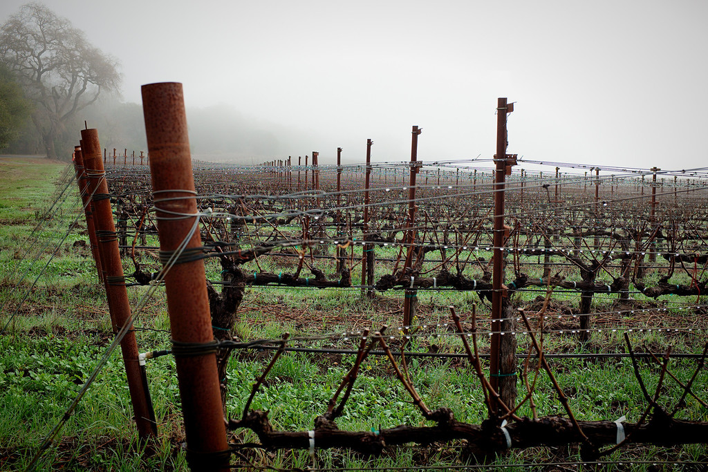 Yountville & St. Helena 2014