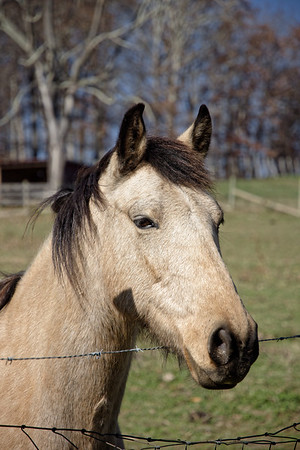 Horse Farm Hike - 16 November 2017