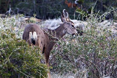 Santa Ysabel Reserve hike