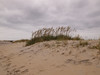 Assateague Beach, Chincoteague, VA
