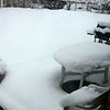 our back yard