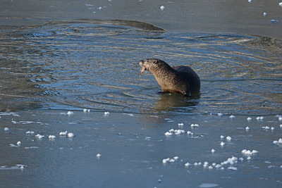 River Otter Breakfast