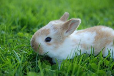 Wendy's Baby Bunny