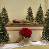 St. Cecilia Church, Leominster decorated for their alter and church for the Christmas season. The statue of St. Cecilia in the church is surrounded by Christmas trees.  SENTINEL & ENTERPRISE/JOHN LOVE