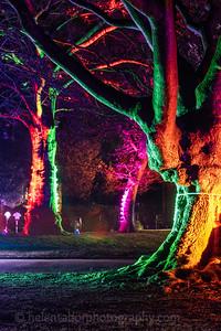 Illuminated Winter Wonderland by night-3
