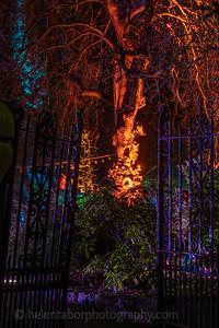 Illuminated Winter Wonderland by night-1