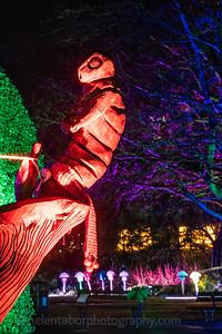 Illuminated Winter Wonderland by night-7