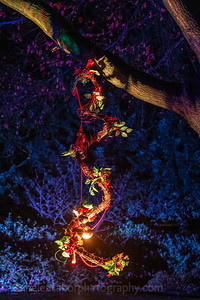 Illuminated Winter Wonderland by night-10