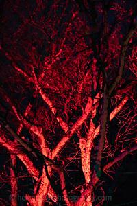 Illuminated Winter Wonderland by night-21