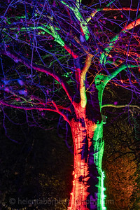 Illuminated Winter Wonderland by night-25