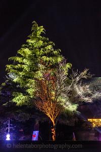 Illuminated Winter Wonderland by night-6