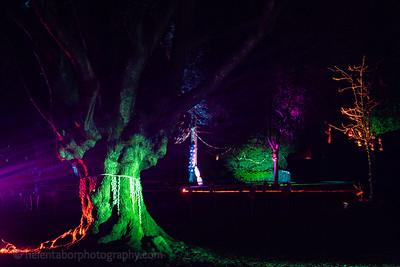 Illuminated Winter Wonderland by night-22