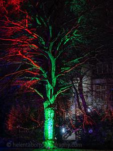 Illuminated Winter Wonderland by night-20